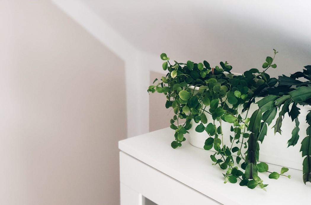 Schöner Wohnen Architect's Finest Close-Up Pflanze